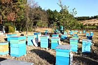 Painted wooden beehives with active honey bees.