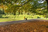 Woman with buggy walking her dog in a colorful autumn forest in the Netherlands, Europe.