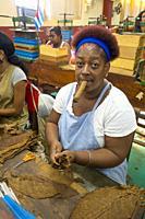 Cuban woman in in a cigar factory in Havana. Cuba.