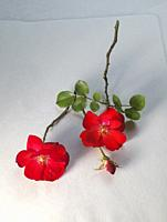 Two red flowers on white background.