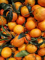 Tangerines with leaves at a market fruit.
