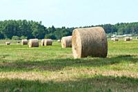 Straw rolls on farmer field in the summer.