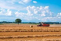 combine harvesting ripe wheat on farm field.