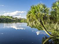 Deer Prairie Creek in Deer Prairie Creek Preserve in Vemice Florida in the United States.