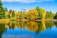 Autumn colours reflected in the class like surface of a pond. Kidderminster Worcestershire UK. October 2020.