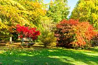 A quiet retreat amongst the beautiful Autumn colours of the Japanese Maples, Bodenham Arboretum Worcestershire UK. October 2020.