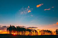 Sunset Sunrise In Pine Forest. Sun Sunshine In Sunny Coniferous Forest. Sunlight Shine Through Woods In Landscape Under Bright Colorful Dramatic Sky A...