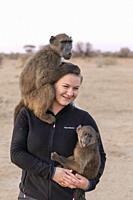 Africa, Namibia, Private reserve, Chacma or chacma baboon (Papio ursinus), young carried by volunteers.
