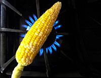 A fresh cob of corn roasting on open gas flame, Canada.