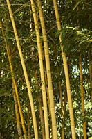 Bamboo Forest in France, Europe.