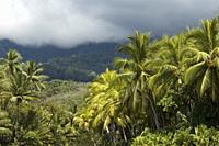 Landscape with tropical trees near Playa Ventanas, South Costa Rica.