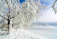 blue, bozdag, christmas, cold,