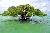 mangroves, Kizimkazi, Unguja island, Zanzibar
