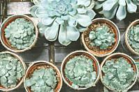 Plenty of succulent pots on wooden table. Home garden.