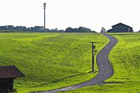 pasture, winding road through green grass.