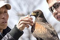 Falconer with falcon at a street festival, Osaka, Japan