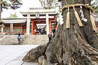 Shimenawa rope around sacred tree in front of Sumiyoshi-taisha shrine, Osaka, Japan