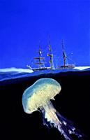 Schooner. School-ship. Training ship. Pink jellyfish (Pelagia nocticula). Eastern Atlantic. Galicia. Spain. Europe.