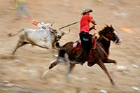 A Colombian cowboy on a horse (garrochero) stabs a bull in the neck while being chased in the arena of Corralejas, a rural bullfighting festival held ...