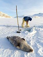 Harvesting a seal from a trap underneath the sea ice. Inuit hunter wearing traditional trousers and boots made from polar bear fur, Melville Bay near ...