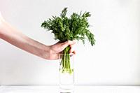 Female hands put fresh fennel into a glass with water.