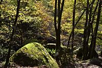 France, Tarn, Sidobre region, Chaos de la Rouquette, The rock formations in autumn .