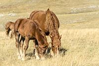 mare and foal pasturing on barren slope, shot in bright light near Filetto lake, L'Aquila, Abruzzo, Italy.