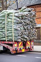 Delivering Trees for Christmas, London UK.