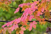 Fall in Yosemite National Park CA USA World Location.