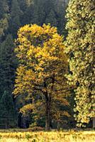 Fall Highlights Yosemite National Park CA USA World Location.