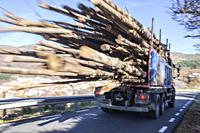 Logs truck rushes down the mountain road. Truck Car in motion blur.