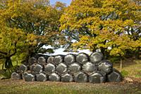 Hay bales stacked under oak trees in autumn in the Duddon Valley in the Lake District National Park, Cumbria, England.