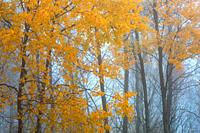 Autumnal forest in the foothills of Velka Fatra mountain range, Slovakia.