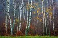 Autumnal forest in the foothills of Mala Fatra mountain range, Slovakia.
