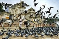 Pushkar, India - August 2020: A man feeds pigeons on a ghat on Pushkar Lake on August 24, 2020 in Pushkar, Rajasthan, India.