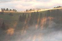 Fog in the foothills of Velka Fatra national park, central Slovakia.