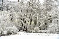 Verschneite Winterlandschaft im Sauerland, Sundern, Hochsauerlandkreis, Nordrhein-Westfalen   Snowy winter landscape in Sundern, Hochsauerland distric...