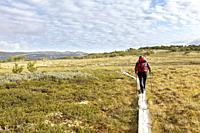 Hiking in Mehørunden, Dovrefjell National Park, Oppland, Norway.