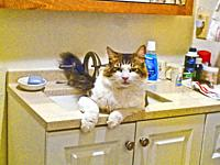 Tommy in the sink #2.