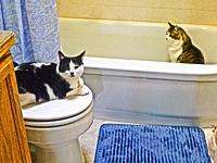 Two cats in the bathroom.