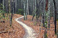 Winding path on Ridgeline Trail in DuPont State Recreational Forest - Cedar Mountain, near Brevard, North Carolina, USA.
