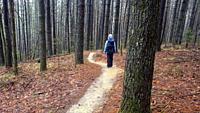 Hiker on Ridgeline Trail - DuPont State Recreational Forest - Cedar Mountain, near Brevard, North Carolina, USA.