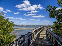 Mangrove Boardwalk on Sarasota Bay in Ken Thompson Park on Lido key in Sarasota Florida USA.