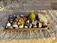 mini garden with stones and house leeks.