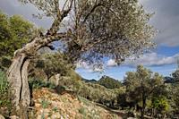 Orient valley, Mallorca, Balearic Islands, Spain.