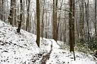 Snowy forest trail - Sycamore Cove Trail - Pisgah National Forest, Brevard, North Carolina, USA.