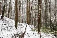 Lone hiker on snowy forest trail - Sycamore Cove Trail - Pisgah National Forest, Brevard, North Carolina, USA.