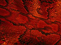 Close up of snakeskin pattern and shapes.
