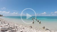 DOCK PIER PILLARS WITH SEAGULLS AND PELICANS. WHITE SAND BEACH IN QUIET CARIBBEAN SEA. PANNED RIGHT