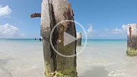 Dock Pier Pillars with Seagulls, resting, in stunning, island with white sand and turquoise water. Caribbean sea. Daylight, Look up